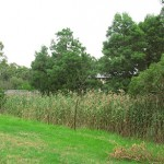 EPBC Act Referral for subdivision in Langwarrin, Victoria 2014