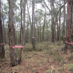 Flora and Fauna and Bushfire Assessment for Mount Helen NBN Tower, Victoria 2013