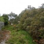 Lexton Reserve Management Plan, Victoria 2013