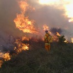 Prescribed Grassland Burn at Williams Landing, Victoria 2014 crop
