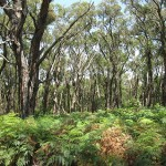 Property Management Plan for private property in Merricks, Victoria 2011.