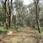 Roadside Management Plan for Nillumbik Shire Council, Victoria 2010-12